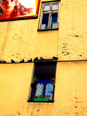 birddows (foto by Lady)
