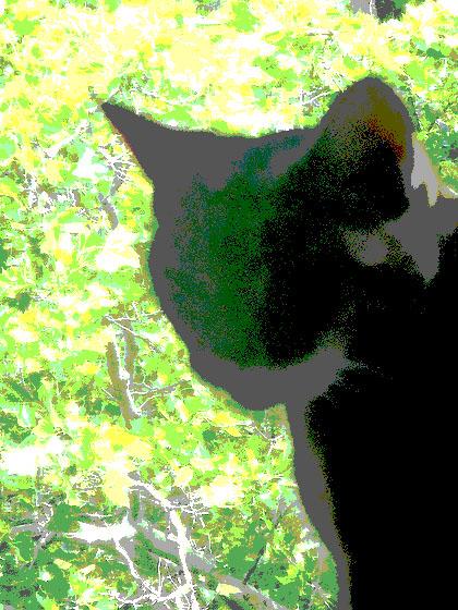noircat1