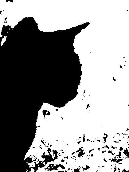 noircat2