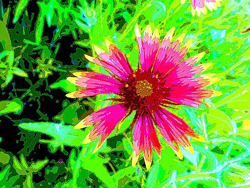 highflower