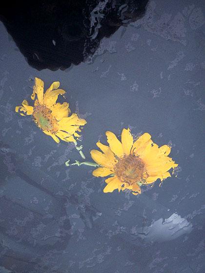 rainflowers2