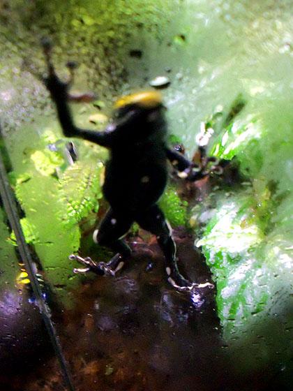 unfocusfrog
