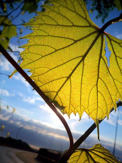 leafrise