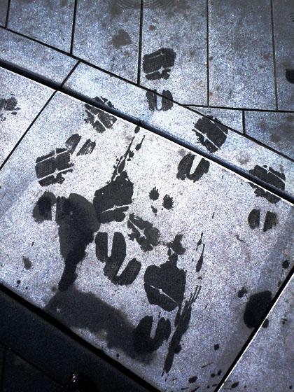 wetwalk